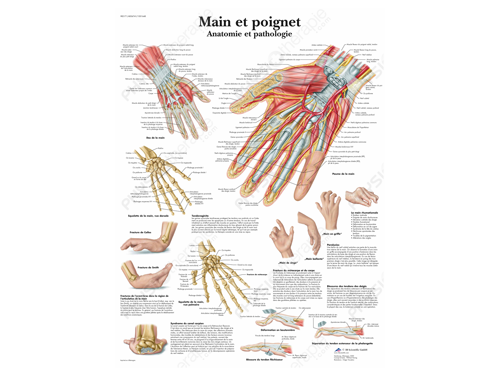 Anatomical board hand and wrist